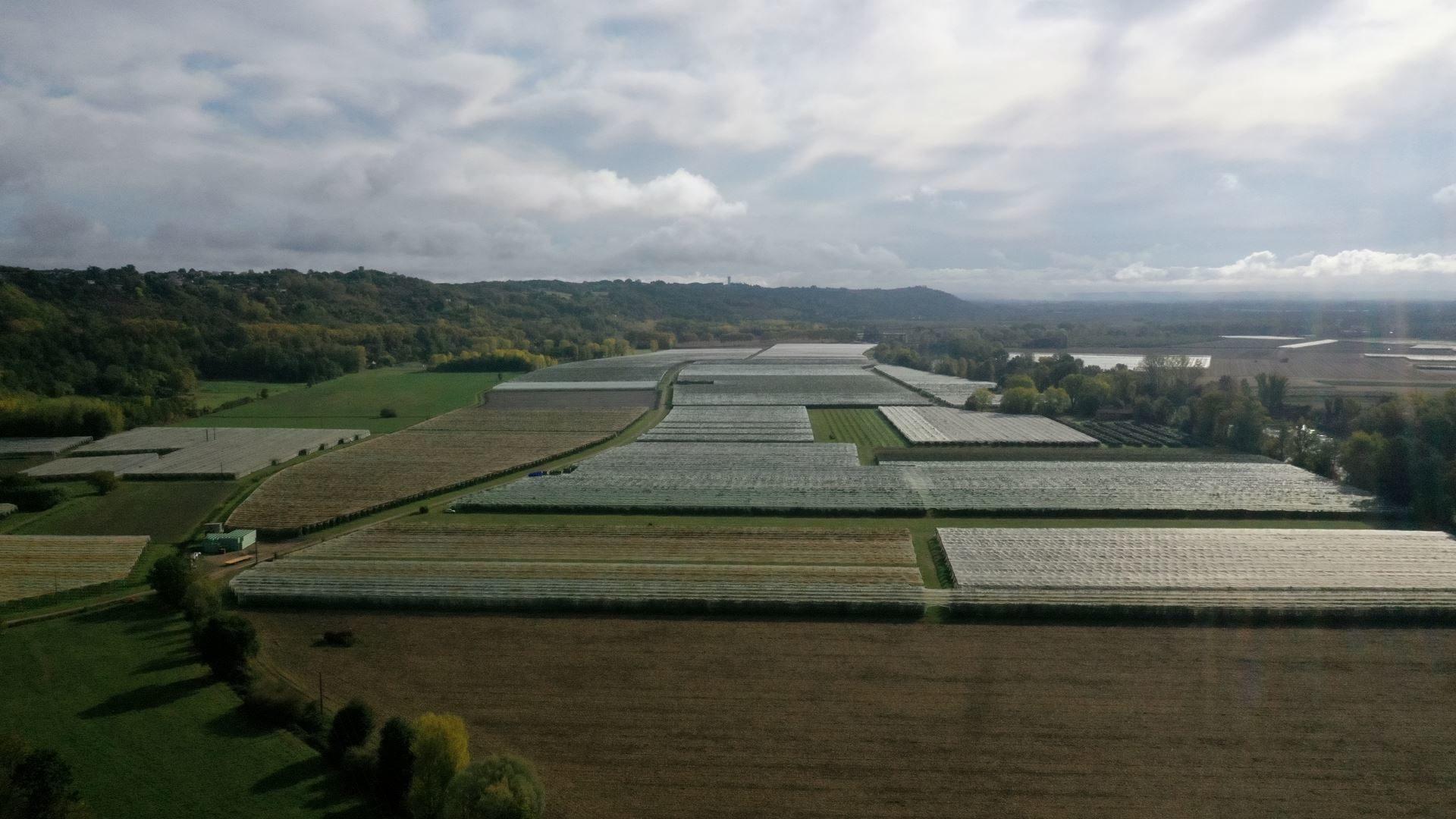 Arboriculture à Lafrançaise (Tarn et Garonne 82)