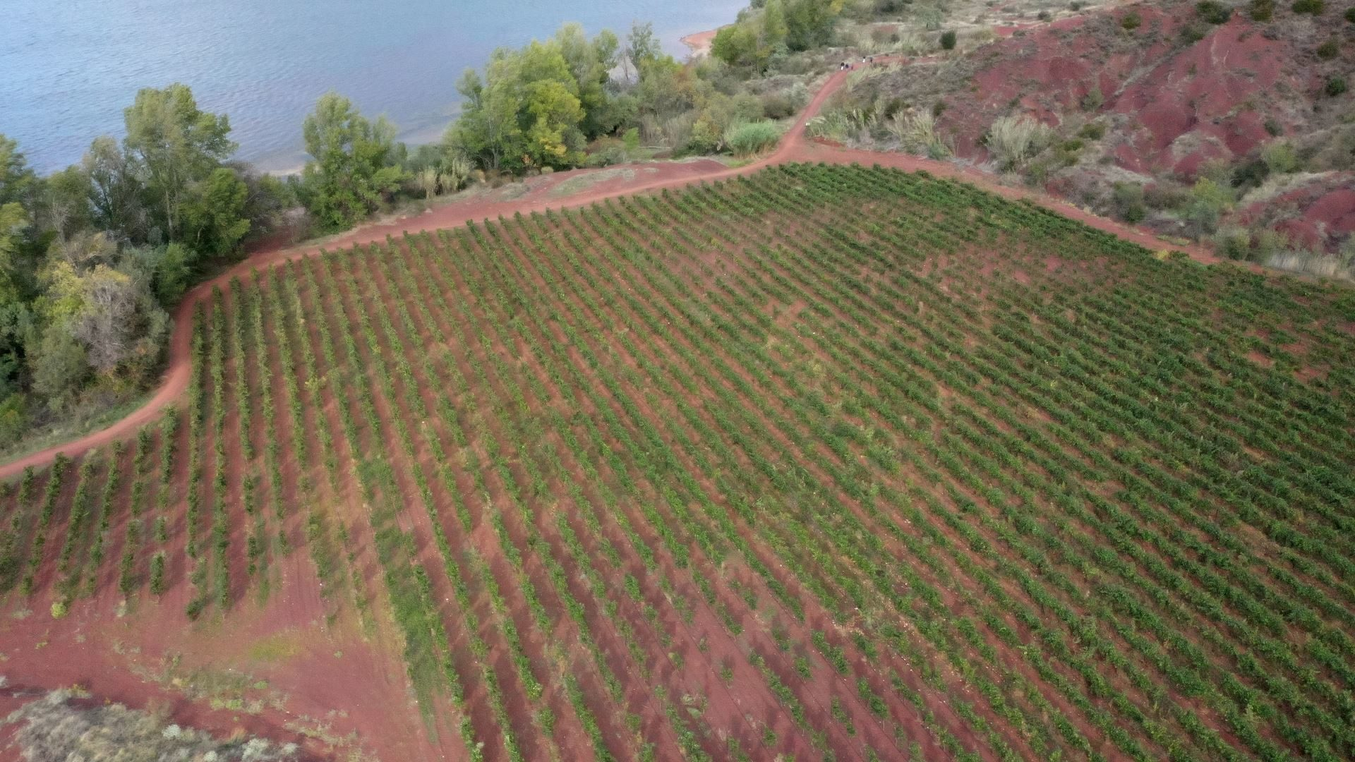 Vignes lac du Salagou