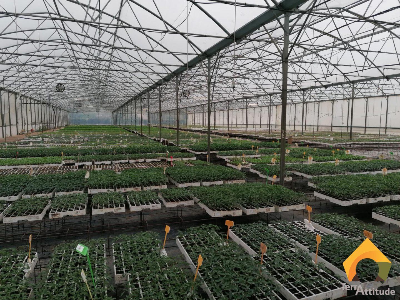 Jeunes plants pour maraîchers en Occitanie